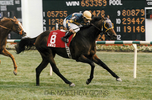 Awad set a course record at Arlington Park, which still stands today, when winning the 1995 Arlington Million-G1 with Eddie Maple, completing the mile and a quarter in 1:58.69.
