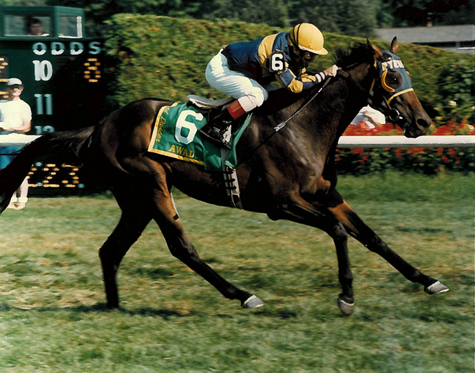 Another course record-setting Grade 1 performance: Awad, at age 7, wins Saratoga's Sword Dancer Invitational Handicap-G1 in August 1997, getting the mile and a half in 2:23.20. At one point nearly 20 lengths behind the leaders, he flew past the field to win by two lengths.