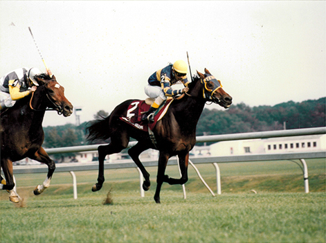 Four stakes wins at 3 included the Million Million Turf at Laurel in which he held off Dancing Douglas to win by a neck.