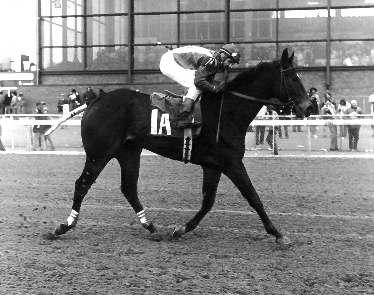 1980 Southern Maryland Handicap, Bowie