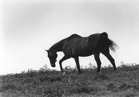 "Still ""king of the hill"" at Sagamore at age 28, Find enjoyed life in the fields at Sagamore in 1978"