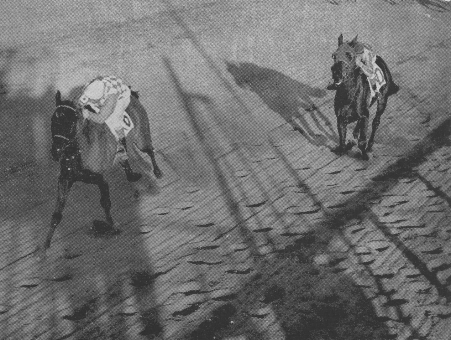 Social Outcast dominated in the Gallant Fox Handicap, the last major stakes of the New York racing season, on November 13, 1954. Run at 1 5/8 miles at Jamaica, Social Outcast drew away from second place finisher Bicarb, with Subahdar finishing third.