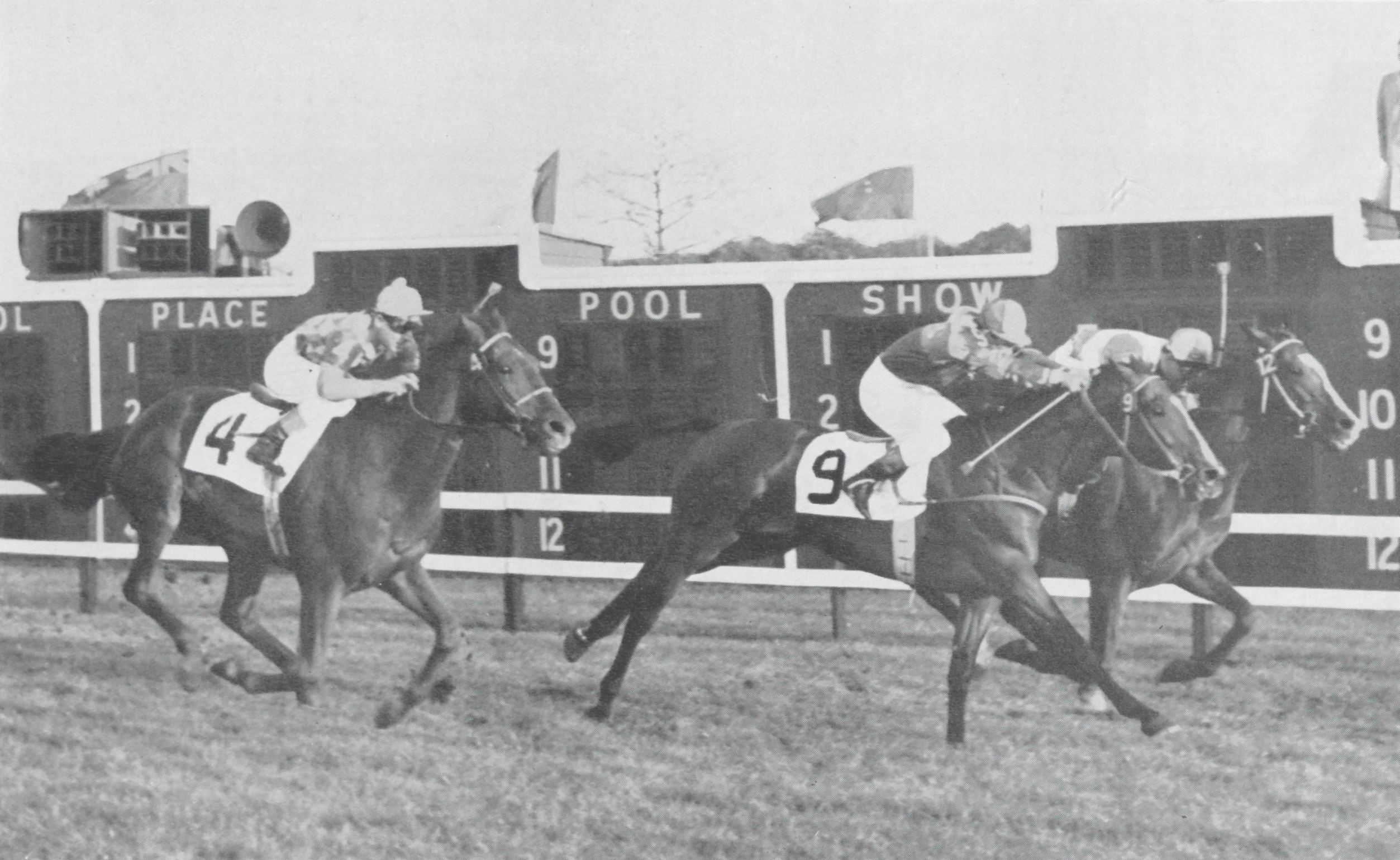 In his only stakes performance on the grass, Social Outcast finished third in the Washington D.C., International, on November 11, 1955, at Laurel Park, behind winner El Chama and Prendase.