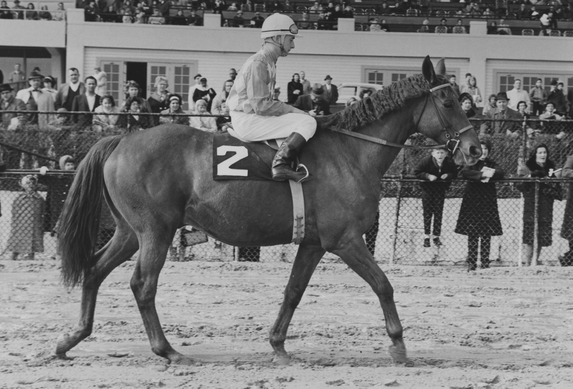 "At 14 years old, retired Social Outcast returned to the track at Laurel Park to participate in the 1964 ""Maryland-bred Day"" celebrations, accompanied by fellow retiree Find (14)."
