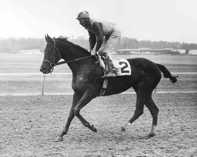 Unraced at 2, Twixt made 70 starts from 3 to 6, winning 26 (Double J Photo)
