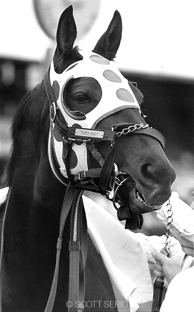 Maryland through and through, millionaire Little Bold John's career lasted nine years through 105 starts, 38 wins, and an all-time record 25 stakes wins.