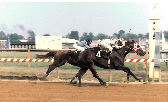 Making his Maryland Million debut in 1987, Little Bold John won the richest race on the card, the Budweiser Maryland Million Classic, by four lengths. He finished third in the next two runnings of the race.