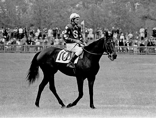 Relaxed yet ready to go, Tuscalee won a record 37 steeplechase race during his 10-year career, a mark that stands to this day. He was piloted by Joe Aitcheson Jr. for the majority of his races. Winants Bros. photo